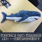 画像3: インスタ映えする超BIGなサメぬいぐるみ80cm (3)