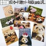 画像1: ポストカード10枚セット「PANDA panda LIFE...」 (パンダ,パンダフォト,大西亜由美さんデザイン,手紙,レター,可愛い,文房具) (1)