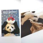 画像2: ポストカード10枚セット「PANDA panda LIFE...」 (パンダ,パンダフォト,大西亜由美さんデザイン,手紙,レター,可愛い,文房具) (2)
