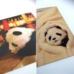 画像3: ポストカード10枚セット「PANDA panda LIFE...」 (パンダ,パンダフォト,大西亜由美さんデザイン,手紙,レター,可愛い,文房具) (3)