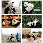 画像4: ポストカード10枚セット「PANDA panda LIFE...」 (パンダ,パンダフォト,大西亜由美さんデザイン,手紙,レター,可愛い,文房具) (4)