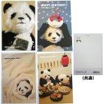 画像5: ポストカード10枚セット「PANDA panda LIFE...」 (パンダ,パンダフォト,大西亜由美さんデザイン,手紙,レター,可愛い,文房具) (5)