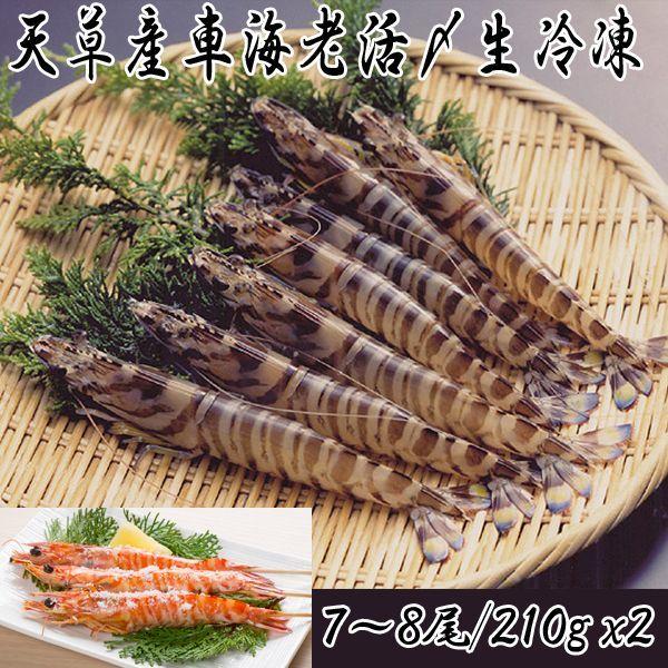 画像1: 天草産車海老活〆生冷凍 (1)